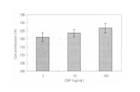 濃縮乳清タンパク質(CBP)の効果:骨芽細胞増殖と骨代謝の促進作用