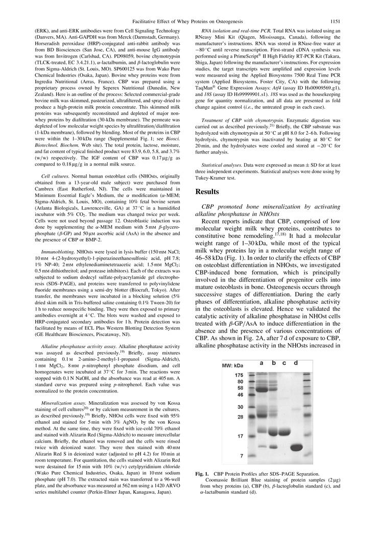 CBP Facilitate Osteogenesis through Activation of the JNK-ATF4 Pathway P2